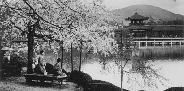 japan-kirschblüten.jpg